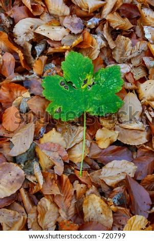 autumn individualist #2 - stock photo