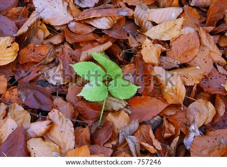 autumn individualist #3 - stock photo