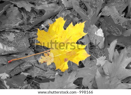 autumn individuality - stock photo
