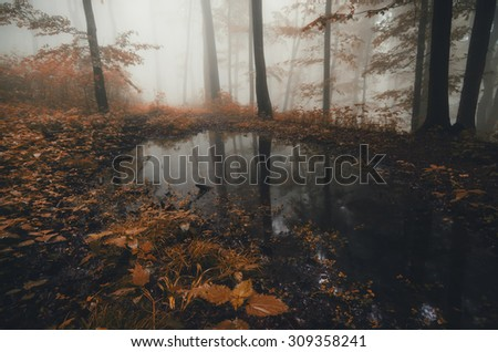 autumn lake in forest - stock photo