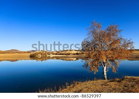 autumn lake scenery with a birch tree in lakeside