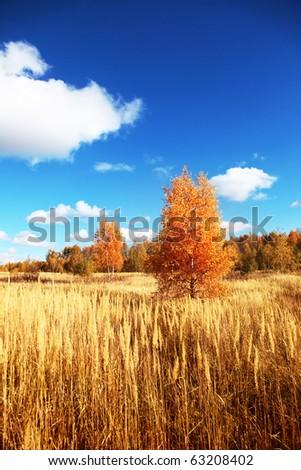 Autumn landscape. - stock photo