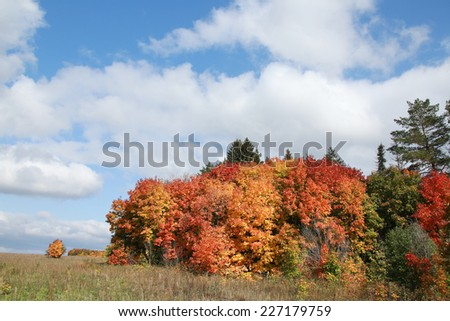 autumn landscape beauty of the deciduous forest with colorful leaves on a sunny day  - stock photo