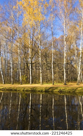Autumn landscape - birch forest with yellow leaves near lake with reflection in water. - stock photo
