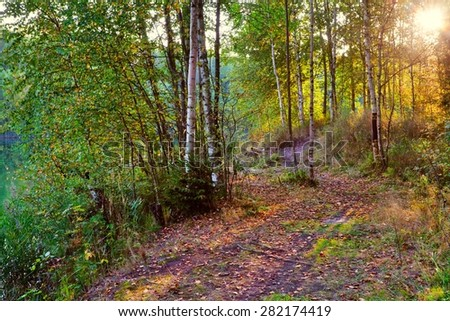 Autumn landscape. Bright colored leaves on the branches in the autumn forest.  - stock photo