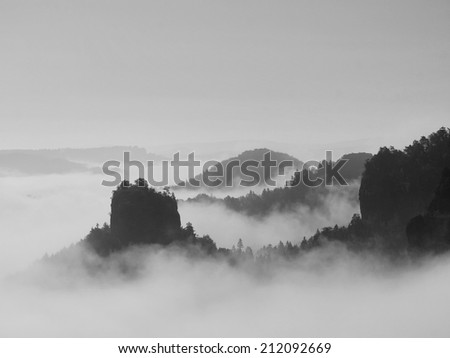 Autumn landscape covered by heavy fog. View into deep misty valley in German national park, Europe.  Black and white picture.  - stock photo