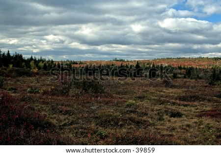 Autumn Landscape, Dolly Sods, Monongahela NF, West Virginia - stock photo