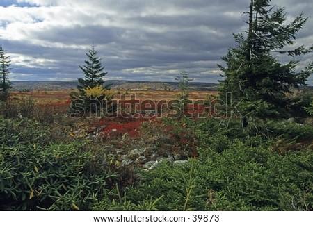 Autumn Landscape, Dolly Sods, Monongahela NF, West Virginia - stock photo