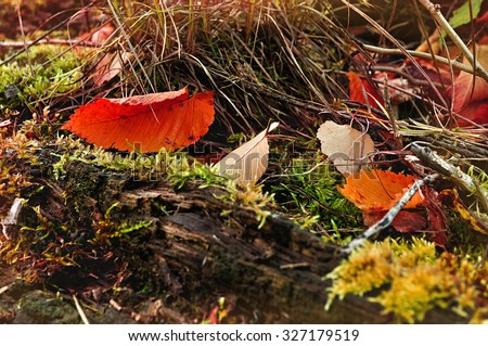 Autumn landscape - forest vegetation and fallen leaves on the log , focus at the leaves, shallow depth of field