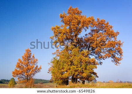 Autumn landscape - group of trees with vivid leaves.