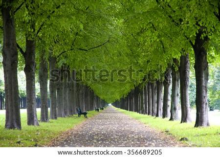 Autumn landscape, Herrenhauser Allee in Hannover, Germany - stock photo