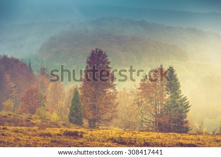 Autumn landscape in mountain. Colorful trees in fog and rain. Filtered image:cross processed vintage effect.  - stock photo