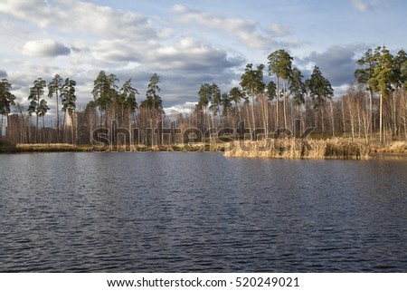 Autumn landscape in Sunny day with blue lake in the foreground and tall pines in the background.
