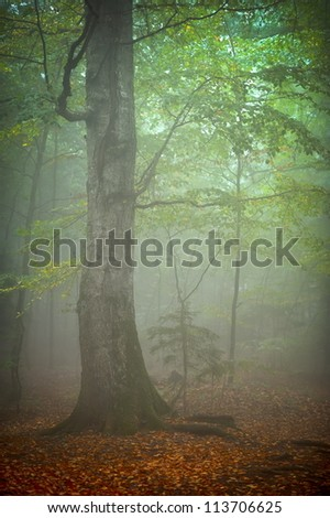 autumn landscape in the forest