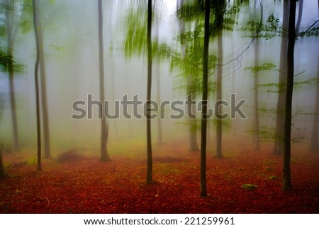 autumn landscape in the forest on foggy morning - stock photo