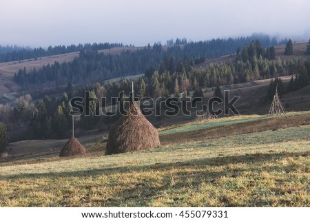 Autumn landscape in the mountains. Field with stacks of dry hay for cattle. Sunny morning. Fir forest on the slopes. Karpaty, Ukraine, Europe. Art processing of photos. Color toning and low contrast - stock photo