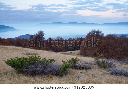 Autumn landscape. Morning twilight in the mountains. Dry juniper bushes. Carpathians, Ukraine, Europe - stock photo