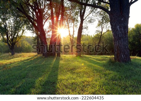 autumn landscape of a beautiful sunset in the woods, the sun's rays make their way through the foliage - stock photo