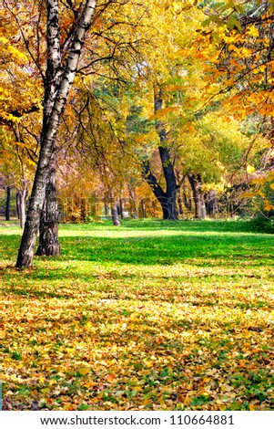 autumn landscape of the city park with different trees and bushes - stock photo