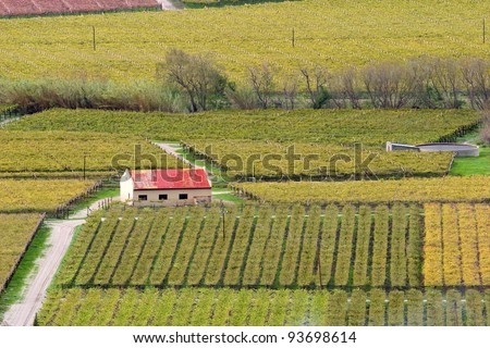 Autumn landscape of vineyards, Western Cape, South Africa - stock photo