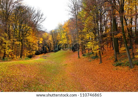 Autumn Landscape. Park in Autumn. Forest  in Autumn. Dry leaves in the foreground. - stock photo