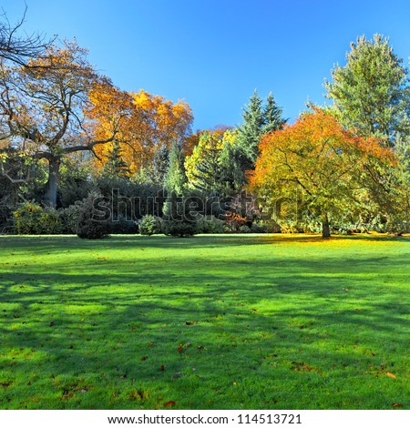 Autumn Landscape. Park in Autumn. Landscape with the autumn forest. Dry leaves in the foreground. Lonely beautiful autumn tree. - stock photo
