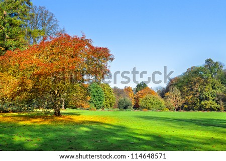 Autumn Landscape. Park in Autumn. Landscape with the autumn forest. Dry leaves in the foreground. Lonely beautiful autumn tree - stock photo