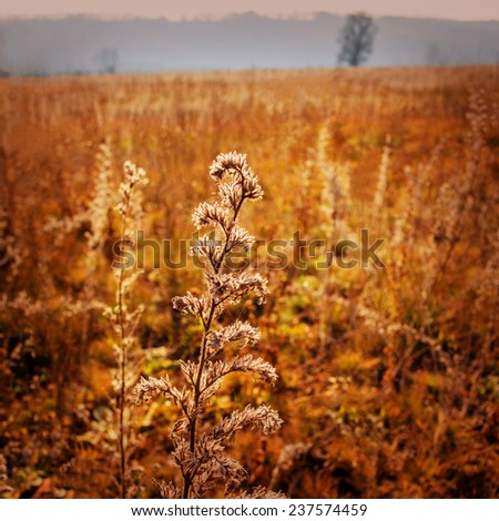 autumn landscape plant on a blurred background - stock photo