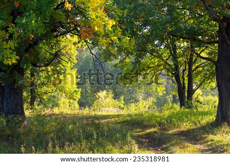 autumn landscape sunny morning in an oak grove