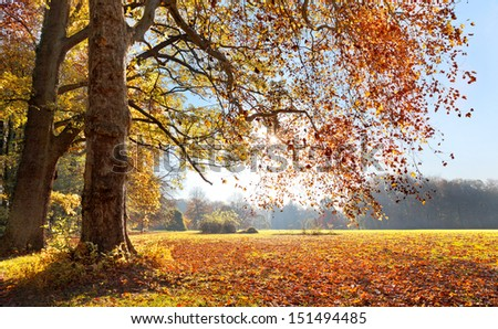 Autumn Landscape. The bright colors of autumn trees. Dry leaves in the foreground. - stock photo