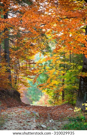 Autumn landscape, Tunnel from colorful trees growing and footpath, vertical - stock photo