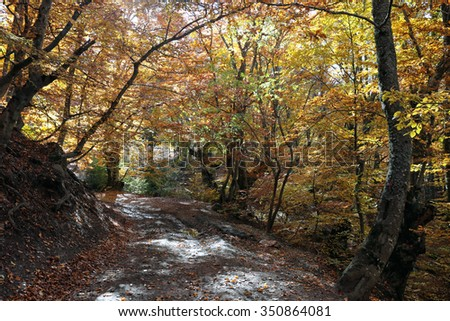 Autumn landscape Walk in the beech forest on a sunny day