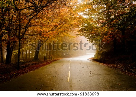Autumn landscape with a beautiful road with colored trees - stock photo