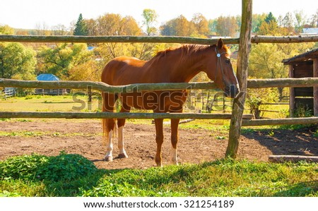 Autumn Landscape with a horse at the farm