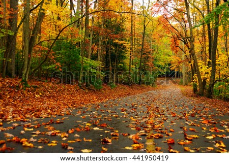 Autumn landscape with bright colorful orange and red trees and leaves in west virginia - stock photo
