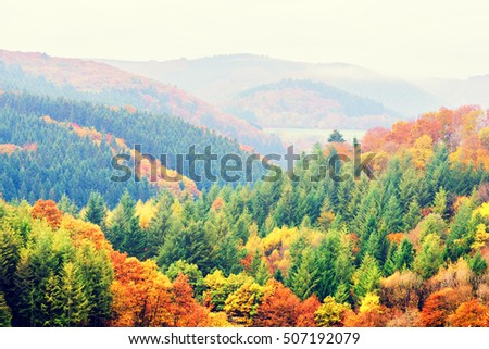 Autumn landscape with colorful fall trees. Top view, aerial. Fall nature background