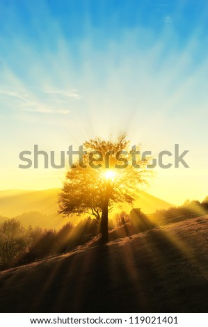 Autumn landscape with colorful forest - stock photo