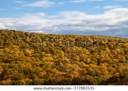 autumn landscape with colorful forest, blue sky and clouds - stock photo