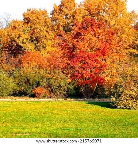 Autumn Landscape with different Trees and Bushes - stock photo