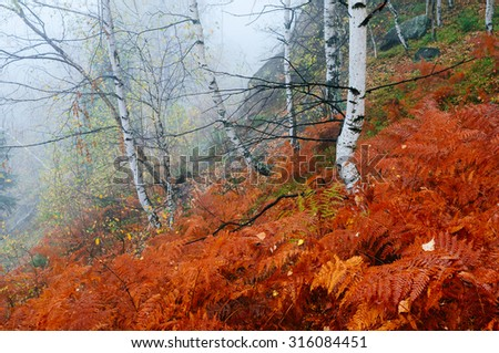 Autumn landscape with fog in the mountain forest. Red fern - stock photo