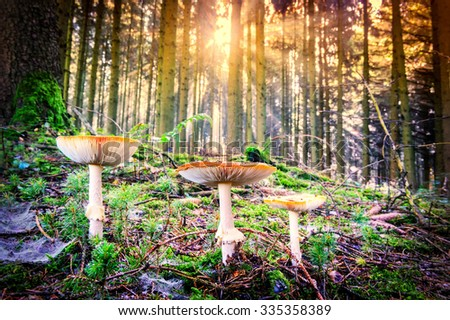 Autumn landscape with forest mushrooms. Nature background  - stock photo