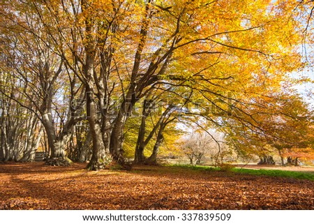Autumn landscape with golden trees.