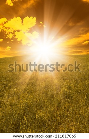 Autumn landscape with grass ,sunset