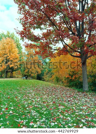 Autumn landscape with green lawn and colorful trees. Quebec, Canada.