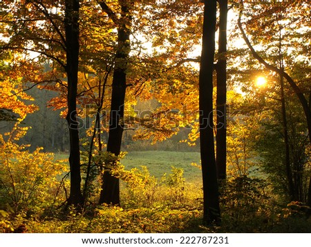 autumn landscape with lights in branches