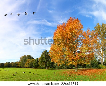 Autumn landscape with migrating birds panorama - stock photo