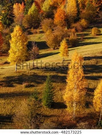 Autumn landscape with mystery yellow trees and falling leaves, natural background