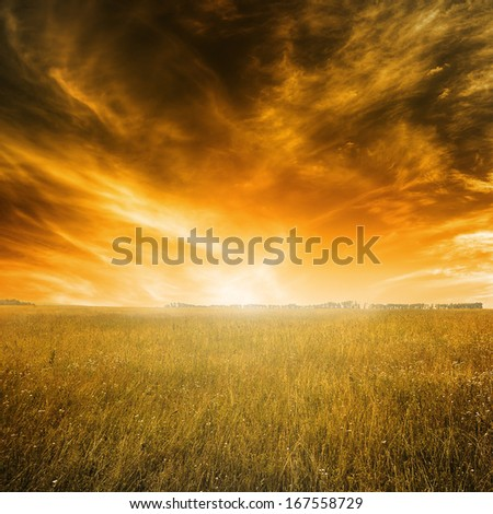Autumn landscape with orange grass and dramatic sky during sunset