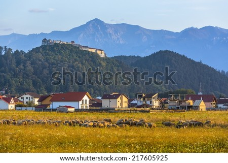 Autumn landscape with Rasnov fortified citadel on top of the hill, Bucegi mountains and sheep grazing in the morning in Rasnov, Brasov county, Transylvania region, Romania.