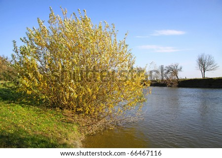 Autumn landscape with river and bright yellow trees and bushes